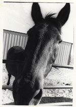 Photograph: Funny looking horse